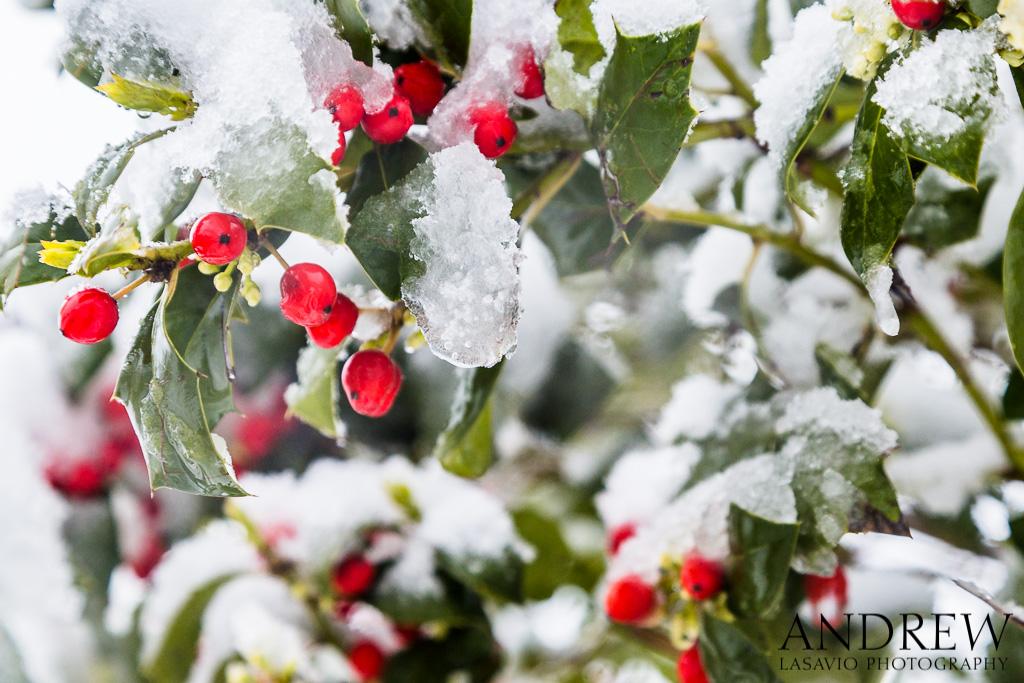 IMAGE: http://www.lasavio.com/images/potn/snow4.jpg